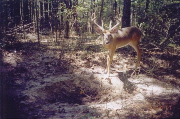Tag Out Year Round Deer Mineral Supplement